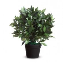 Pianta ornamentale LAURO H50cm